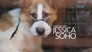 Aired: January 8, 2017 Mula sa RA 8485 o Animal Welfare Law at RA 9482 o Anti-Rabies Act bawal ang pagpatay, pagkatay at pagkain ng karne ng aso.