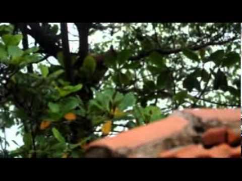 Onça é encontrada em casa em Santa Cruz do Rio Pardo