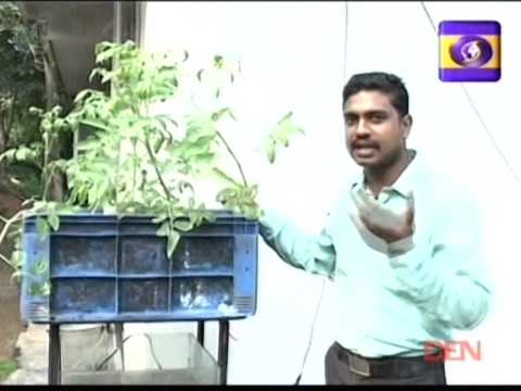 Simple Aquaponic Growing Tips That Anyone Can Try