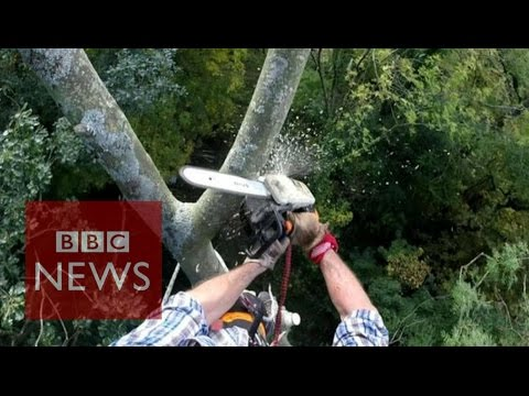 How an ash tree is turned into a spoon - BBC News