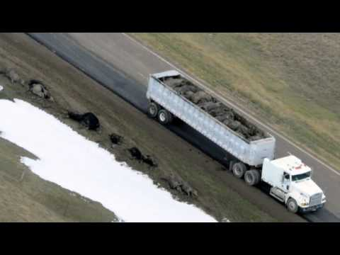 Blizzard press tour - Governor Dennis Daugaard and U.S. Senator John Thune flew over areas hard hit by a weekend snowstorm that killed thousands of animals. Some ranchers in weste...