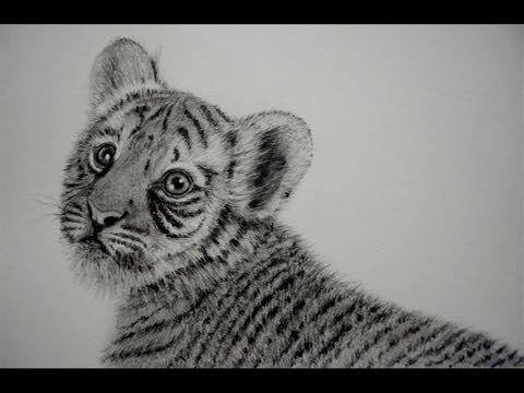 Dibujos De Animales Private 4rum