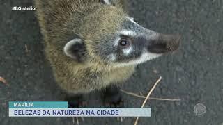 Bosque municipal é refúgio de natureza dentro de Marília