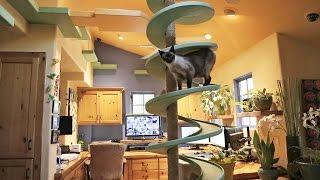 楽園での暮らしは日々是好日。猫たちのために作られたパラダイスなお宅をご覧ください