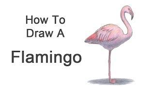 Видео урок: как нарисовать фламинго карандашом