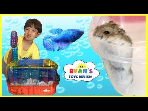 First Pet Fish! Pet Hamster Cleaning Cage Kids Pets! Family Fun Event Kids Video Ryan ToysReview