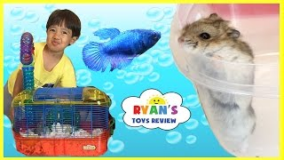 First Pet Fish! Pet Hamster Cleaning Cage Kids Pets! Family Fun Event Kids Video Ryan ToysReview full download video download mp3 download music download