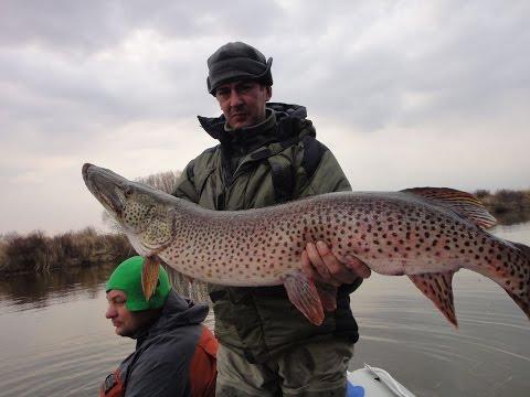 рыбалка ловля трофеев