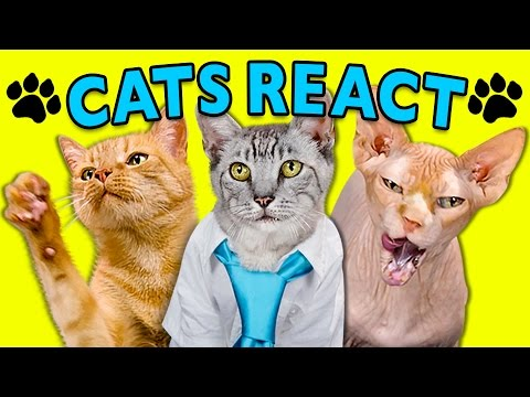 Watch Cats React to Viral Videos
