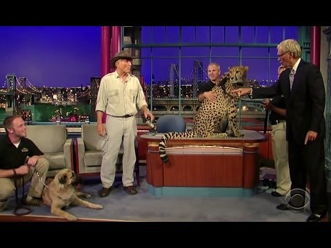 kangal dog - Turkish Dog Kangal Protects The Cheetah From Extinction (The late show ) !!! Turkish Dog | Turkish Dog Kangal | World Strongest Dog in the world | Sivas Kang...