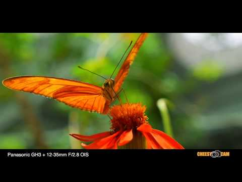 Video Test – Panasonic Lumix GH3 with the New 12-35mm f 2.8 Lens – STUNNING!