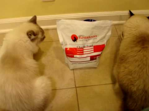 0 RedMoon Custom Pet Food   Review Of Charlie Feast