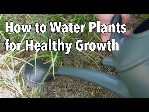 Are You Watering Your Plants Correctly? Tips and Common Mistakes