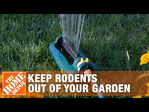 How To Keep Unwanted Rodents Out of Your Garden - The Home Depot