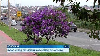 Idoso se dedica a plantar e cuidar de árvores em avenida de Sorocaba