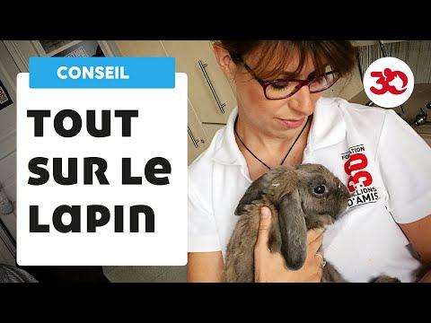 Conseils de vétérinaire avant d'adopter un lapin.