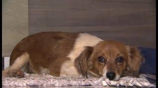 Duas cachorrinhas são baleadas em Piedade e donas procuram atiradores