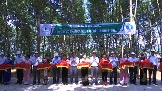 Tin tức 24h: Mở miệng khai thác mủ cao su ở Lai Châu