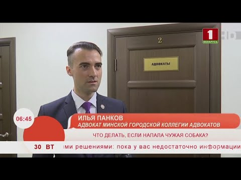 Напала собака (БТ, Добрай ранiцы) - Илья Панков, адвокат (Минск)