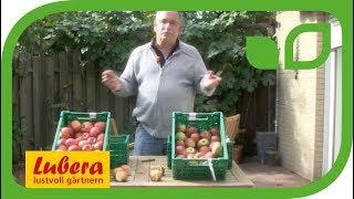 Einfluss des Erntezeitpunkts auf Reife und Lagerung bei Äpfeln