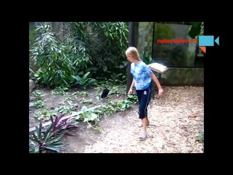Zvědavý pták v Zoo :D