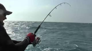 Морская рыбалка. Вываживание лакедры  Чеджу май 2013.