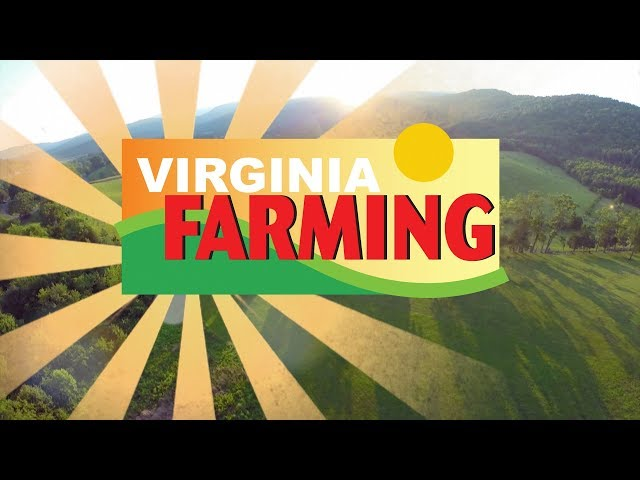 Virginia Farming: Pollination and Importance of Bees