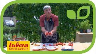 Neue Tomaten von Burpee Europe an der Hampton Court Flower Show 2019