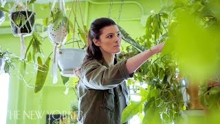 Why Millennials Love Their Houseplant Jungles