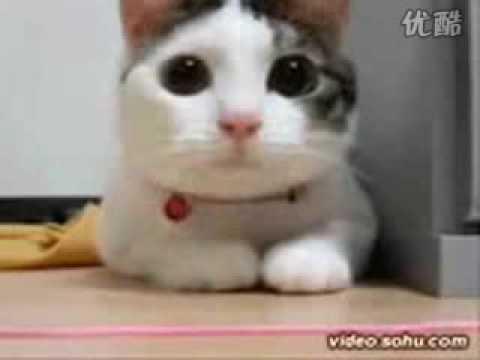貓咪的節奏感也太強了吧!