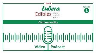 Gärtnerradio Podcast #1: Yacon und Oca - Wurzelgemüse aus den Anden für unsere Gärten