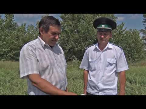 Об обнаружении в Ростовской области новых очагов амброзии полыннолистной и горчака ползучего