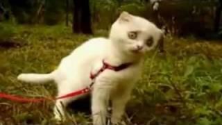 Dramatic Cat – 4