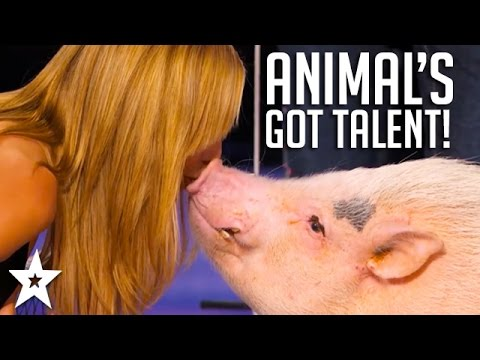 Performing Animals on Talent Shows