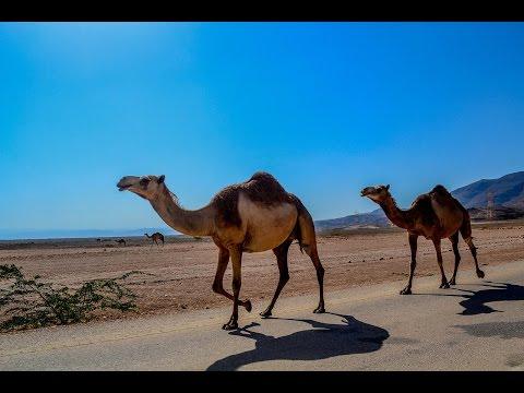 أعماق العلوم ح(5) - سفينة الصحراء !