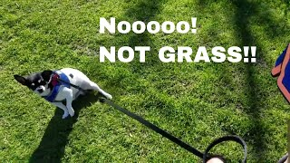 HE'S AFRAID OF THE GRASS!! Idaho FallsRic & Melody believe in LIVING FREE FOREVER. We aim for a minimalist & simple lifestyle, so we can feel free to do what matters most to us...spending time with our family, traveling & just enjoying life.  We hope to inspire others to follow their dreams and goals as well.Subscribe To Noah's Channel: TikTakFrog https://www.youtube.com/channel/UCj26xbO4QyY_05K4W3vDbcQNoah's Instagram: https://www.instagram.com/tiktakfrog/ Willow's Instragram: https://www.instagram.com/ruthberry207/Thank you for supporting our channel by shopping on our Amazon affiliate store http://amzn.to/1ZNfFjv   *****************************************LOVE this credit card for travel! Earn 50,000 bonus points with Chase Sapphire Preferred.  Learn more. https://applynow.chase.com/FlexAppWeb/renderApp.do?SPID=FNLC&CELL=63HD&MSC=1543018559 #ad*****************************************************************LEARN ANYTIME ANYWHERE - FREE 30 Day Trial! http://www.tkqlhce.com/click-8093518-12177384*Learn new business, creative, & tech skills with expert-led online video tutorials************************************************************AWESOME Travel Sites!$40 off your 1st trip stay! Travel with Airbnb 1 million+ places to stay around the world or rent your home & earn http://www.airbnb.com/c/melodys449  Home Stay - Great Value In Over 150 Countries!http://www.jdoqocy.com/click-8093518-12353257FREE Flight Comparison With Skyscanner http://www.kqzyfj.com/click-8093518-12532519  Find Yelp Deals In Your Area http://www.anrdoezrs.net/click-8093518-10867459  WORLD NOMADS TRAVEL INSURANCE Click here to get a free quote http://goo.gl/W055p1   Join AAA auto travel club to save on travel! http://autoclubsouth.aaa.com/refer/?ref=3007956552  I've been a member for over 33 years! EURail Select Pass http://www.dpbolvw.net/click-8093518-11726308 ************************************************BE PREPARED FOR ANY EMERGENCY OR DISASTERHoneyville Emergency Preparedness Food & Supp