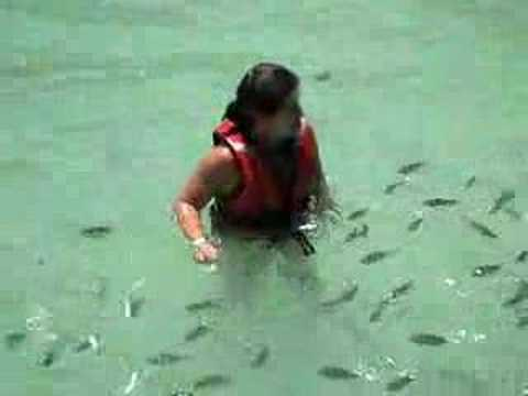 Baby shark attack this girl!!! In Malaysia... Watch... (Video)