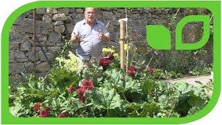 Die Idee des Paradiesgärtleins für die Gartencenter