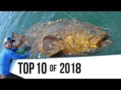 Top 10 Best Fishing Moments from 2018 - Thời lượng: 15 phút.