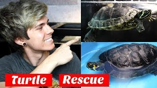 Update on My Rescued Turtle! From 20 Gallons to 120 Gallons by Tyler Rugge