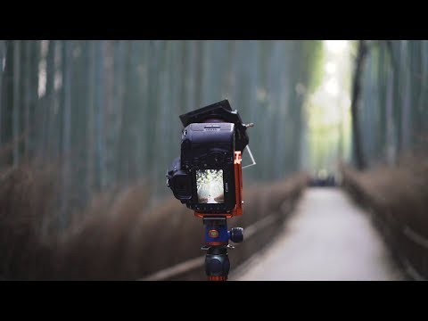 The Bamboo Forest in Kyoto   Japan Photography Vlog