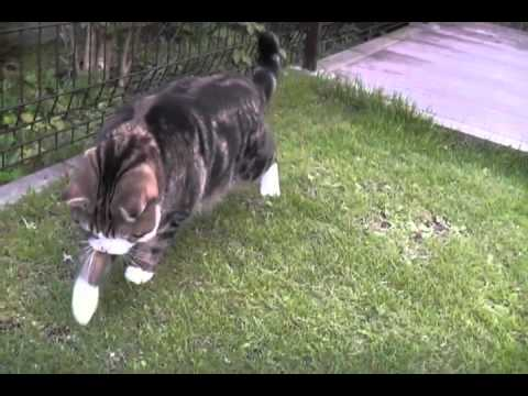 how to stop cats from shiting in your garden
