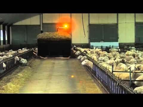 Alimentación profesional en explotación de ganado ovino lechero