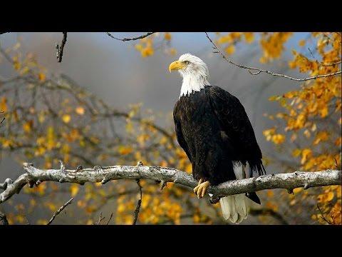 Ανασκόπηση 2016 – No comment: ο θαυμαστός κόσμος των ζώων – review