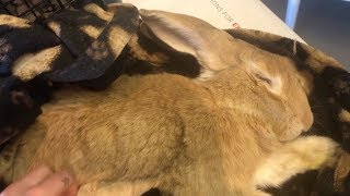 There's something wrong with my rabbit... He's drooling!? by Tyler Rugge