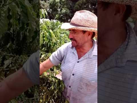 Visita a lavouras de café em Rolim de Moura RO.