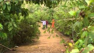 Travaillons pour les forêts