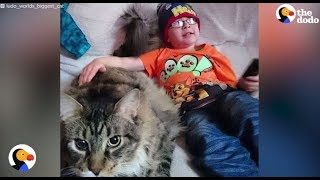 Longest Cat In The World Helps Brother With Autism  He's the longest cat in the world — but that's not what makes him so special ...