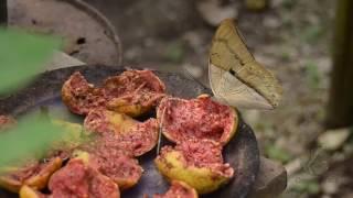 Mujeres empoderadas de occidente de Boyacá trabajan con cultivo de Mariposas