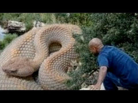 Las 5 Serpientes Más Grandes del Mundo